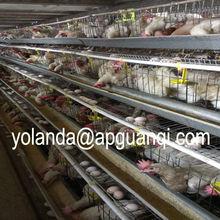 systematization otomatik tavukçuluk sistemi tavuk