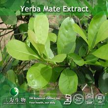 Yerba Mate Extract Polyphenol powder in 3W Factory