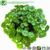 100% Natural Centella asiatica extract Asiaticoside 10%-98% HPLC