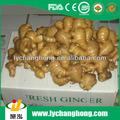 Las variedades de jengibre/de jengibre y el ajo de exportación/jengibre fresco la venta