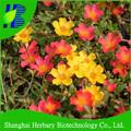 2014 vendita calda Portulaca grandiflora semi di fiori da giardino