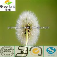 Dandelion Root Extract 10:1 (TLC) Herbal Extract