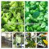 new frozen food frozen broccoli hot sale