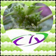 Natural Tribulus P.E Supplier Saponins