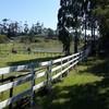 vinyl PVC 3 rails fencing