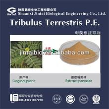 Tribulus terrestris extract saponins 80% saponins furostanolic saponins