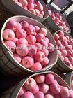 croped red fuji apple fruit fresh exporter