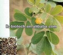 De semillas de Cassia naturales P.E. 5:1, 10:1