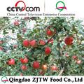 De frutas de manzana, manzana fresca de fuji 20kg lleno de cartón