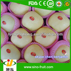 Chinese golden delicious Apple for sale