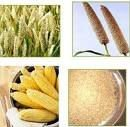 Food Grains,Agro Commodities,Rice,Wheat,Frozen Meat