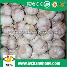 high quality new crop natural garlics