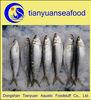 We selling fresh sardine fish whole round