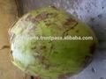 Tropicais e sub- frutas tropicais