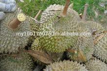 Pahang Durians