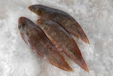 FROZEN SOLE FISH, FRESH SOLE FOR SELL, Tongue Sole Fish