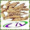 dang gui herb medicine organic angelica sinensis
