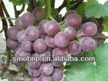 BNP Supply High Quality Best Quality Top New 100% Grape Skin Extract/high quality grape skin extract