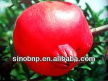 BNP Supply 100% Natural Pomegranate Seeds Extract