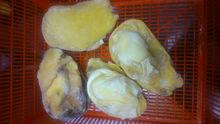 Spyder Conch Meat