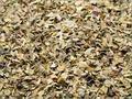secas hojas de albahaca