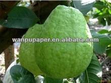 Guava grow bag