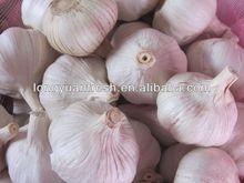 2014 chinese garlic good quality jinxiang garlic