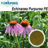 echinacea polyphenols 4% echinacea herb extract