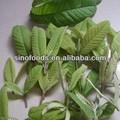 2014 caliente del ventilador shi liu ye hierbas secas de plátano de la hoja