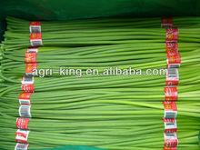cheap frozen food garlic sprout