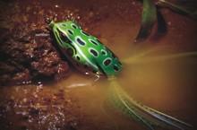 65mm 15g/frog fishing lure/fishing gear