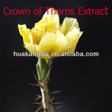 Natural Crown of Thorns Extract