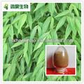 bamboo extrato de folha de amostra grátis