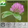 Red clover Extract Isoflavones by HPLC