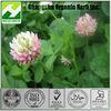 Red clover Extract 8% 18% Isoflavones