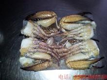 cleaned crab of charybdis natator