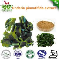 2014 New Arrival Undaria pinnatifida extract