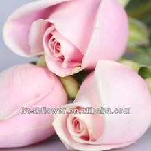 Tipos de flores frescas de corte de pink rose flor