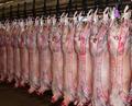 De alta calidad de la canal carnedevacuno, cordero, de la carne