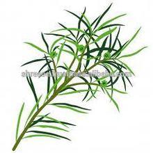 100% Certified Pure n Natural Organic Tea Tree Oil (Melaleuca Ahemifolia)
