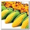 ricos de color amarillo de calidad de semillas de maíz