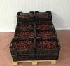 Fresh Cherries VAN, BING, Lambert
