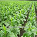 2014 de nova matéria tabaco em folha preço competitivo
