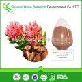 orgánica soluble en agua salidroside extracto de rhodiola rosea