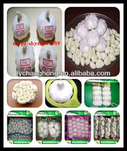 Wholesale Jinxiang Original New crop Fresh White Garlic with GAP Certificate