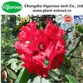 Estratto di rododendro/rododendro dauricum estratto/rododendro fornitore