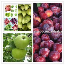 best quality granny smith apple fruit