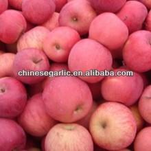 Supply good taste fuji apple