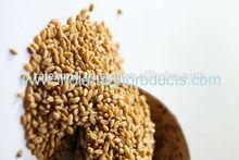 Wheat for Human Consumption India Origin