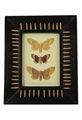 Moldura de madeira desenhador Handmade indiano Photo Frame